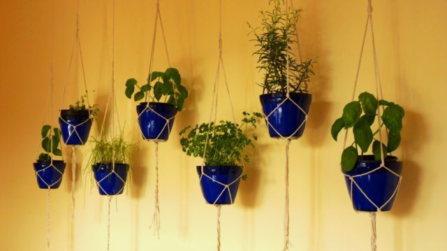 hanging gerb garden.2