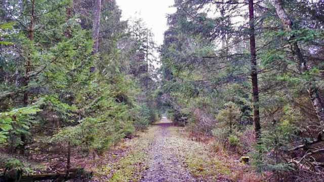 Pfrunger Ried forest path