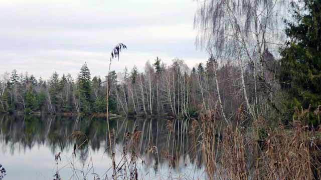 Pfrunger Ried lake