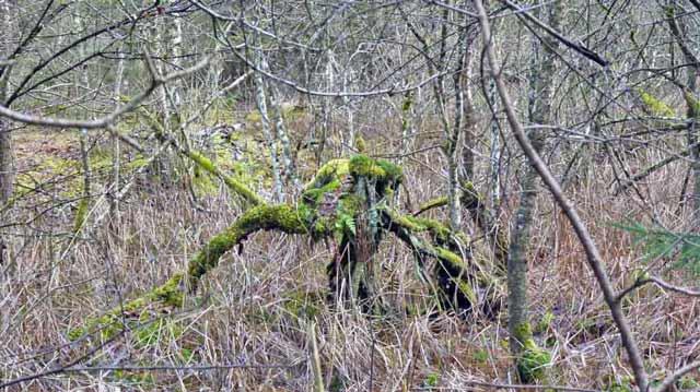 Pfrunger Ried forest