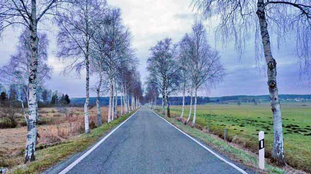 Road to Pfrunger Ried