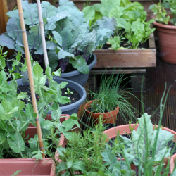 CONTAINER GARDENING: EASY VEGETABLES TO GROW