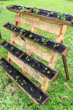 Strawberry Planter Using Pallet