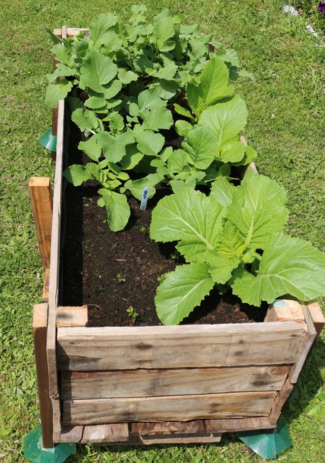 Easy DIY Elevated Planter Box from Pallet. | www.foxyfolksy.com