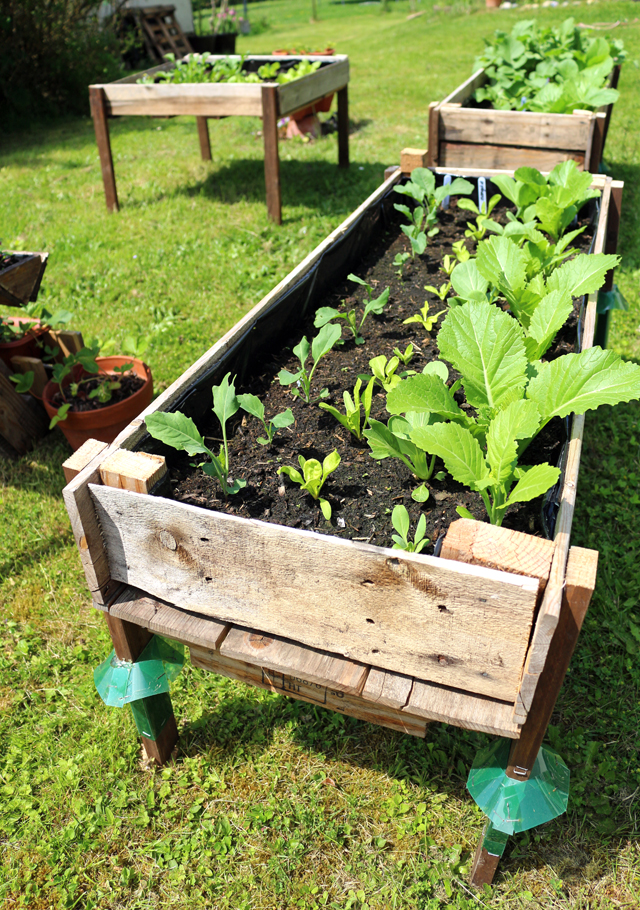 CONTAINER GARDENING Easy DIY Elevated Planter Box From Pallet