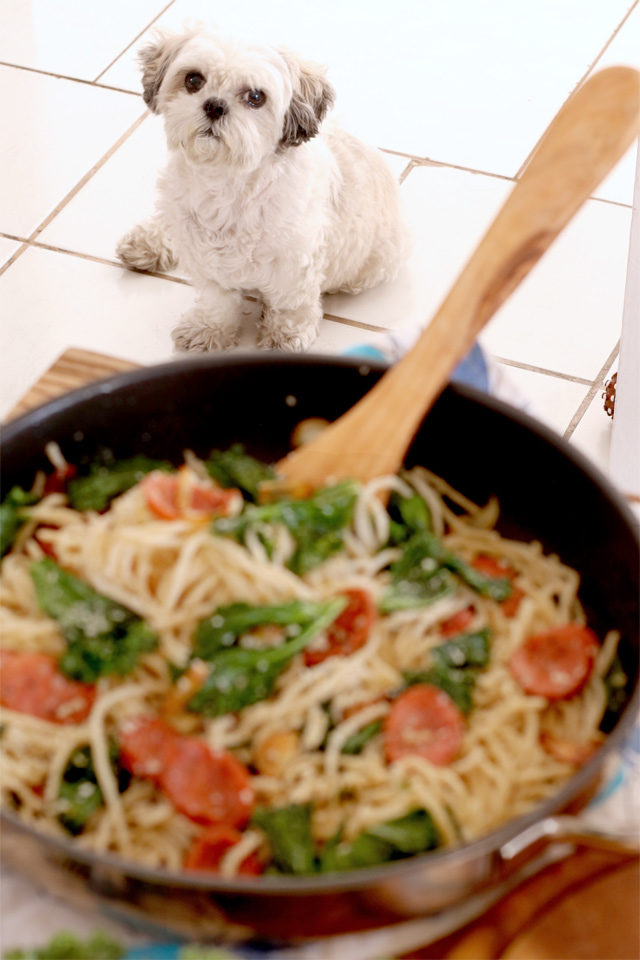 my dog looking at the kale pasta